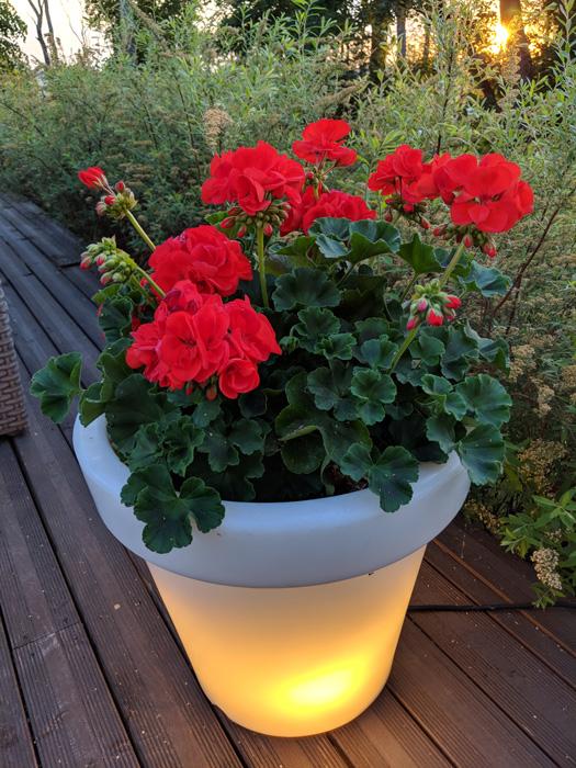 13 beleuchteter Blumentopf